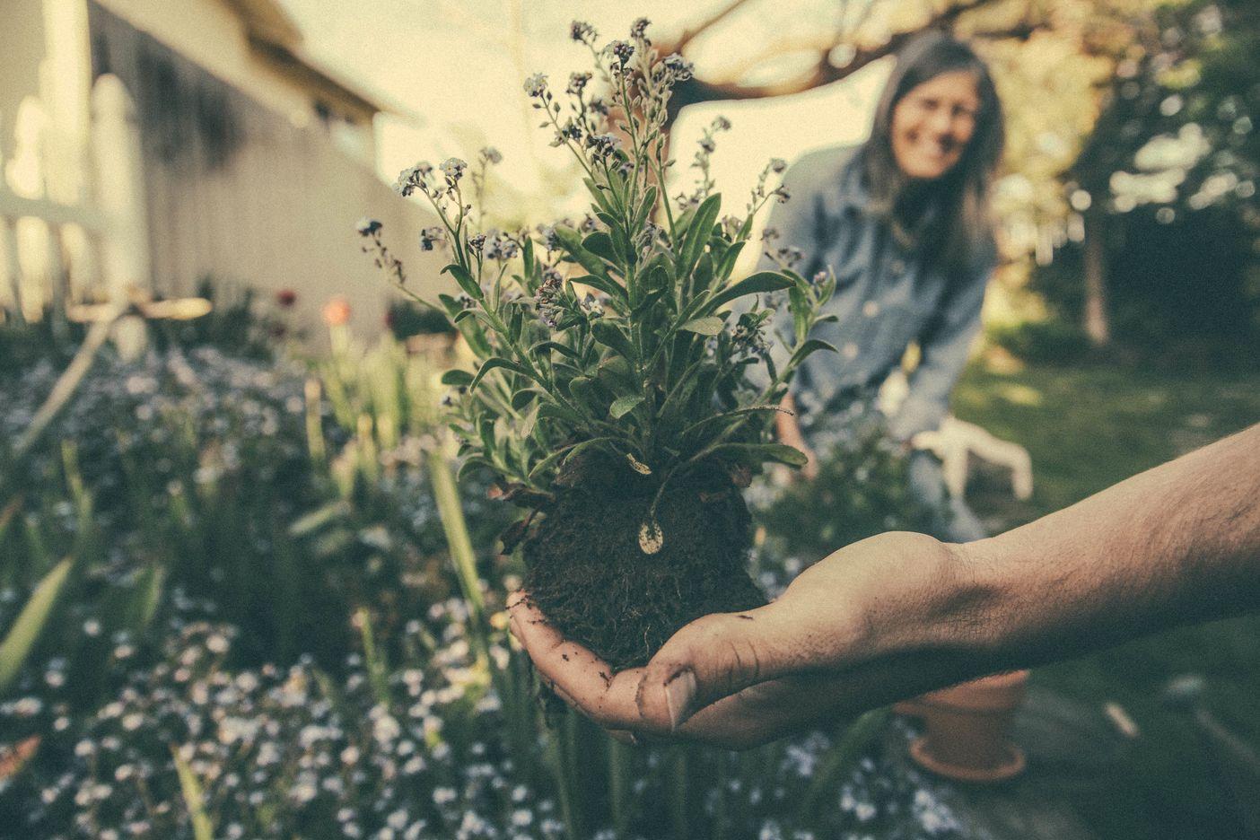eetbare planten thuis